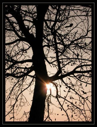 albero-novembre